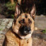 تهجين الكلاب و أنواع الكلاب