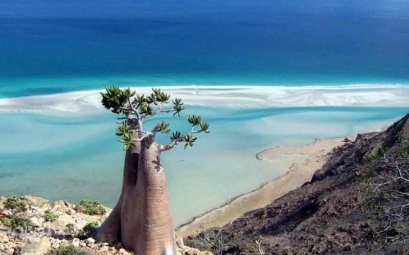 جزيرة سُقطرى