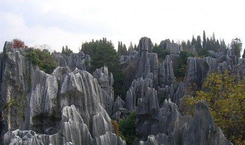 غابة الأحجار – الصين